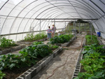 Paririe's Edge Greenhouses